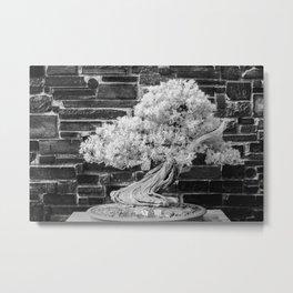 Bonsai Juniper Thrives in its Tray in a Japanese Garden Metal Print
