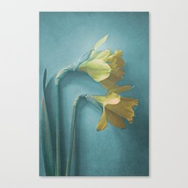 Narcisses Canvas Print
