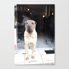 French Cafe Pooch Canvas Print