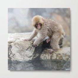 Young Snow Monkey Metal Print