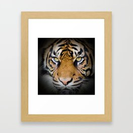 Tiger in the shadow Framed Art Print