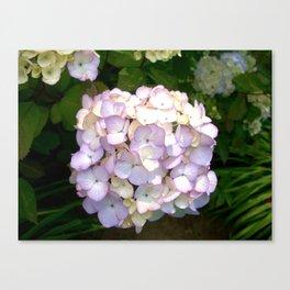 Pretty Purple Hydrangeas Canvas Print