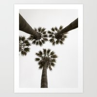 palm trees Art Prints featuring palm trees by Joao Bizarro
