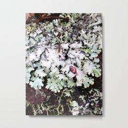 Hawaiian Lichen Metal Print