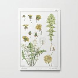 Pissenlit (dandelion) from La Plante et ses Applications ornementales (1896) illustrated by Maurice Metal Print
