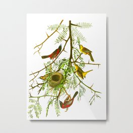 Orchard Oriole Bird Metal Print