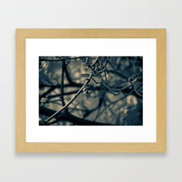 Spiderleaf Framed Art Print
