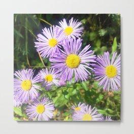 Watercolor Flower, Purple Fleabane 02, Windy Gulch, RMNP, Colorado Metal Print