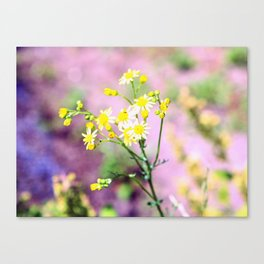 yellow wild flower Canvas Print