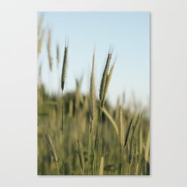 A rich crop Canvas Print