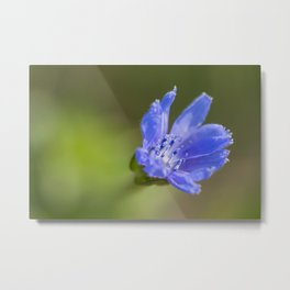 Close-up of a blue wildflower Metal Print