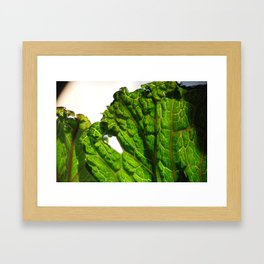 Cabbage at close range.  Framed Art Print