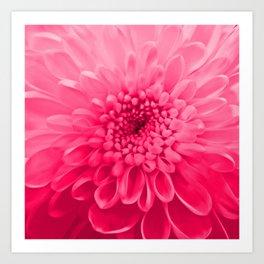 Chrysanthemum pink Art Print