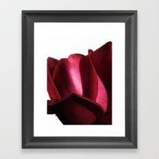 lovely rose Framed Art Print