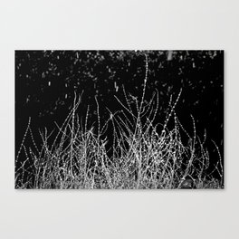 SAGE SKELETON Canvas Print