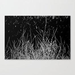SAGE SKELETON Canvas Print