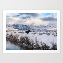 Moose in the Tetons Art Print