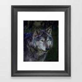 Night wolf Framed Art Print
