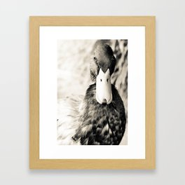 Courage Under Feathers Framed Art Print