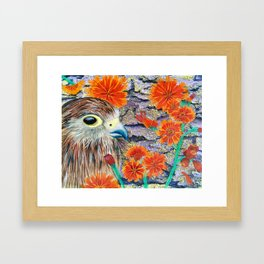 Baby Hawk with orange flowers Framed Art Print