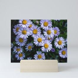 Plant Patterns - 𝘌𝘳𝘪𝘨𝘦𝘳𝘰𝘯 sp. Mini Art Print