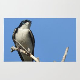 Male Tree Swallow Rug