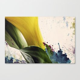 Painted Calla Lily  Canvas Print
