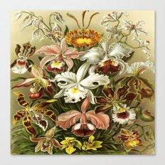 Ernst Haeckel Kunstformen der Nature Orchids Canvas Print