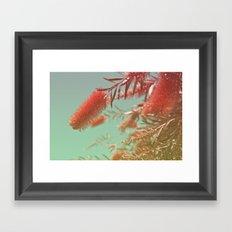 Red Fluffy Plant Framed Art Print