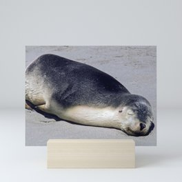 Young seal sleeping on a beach Mini Art Print