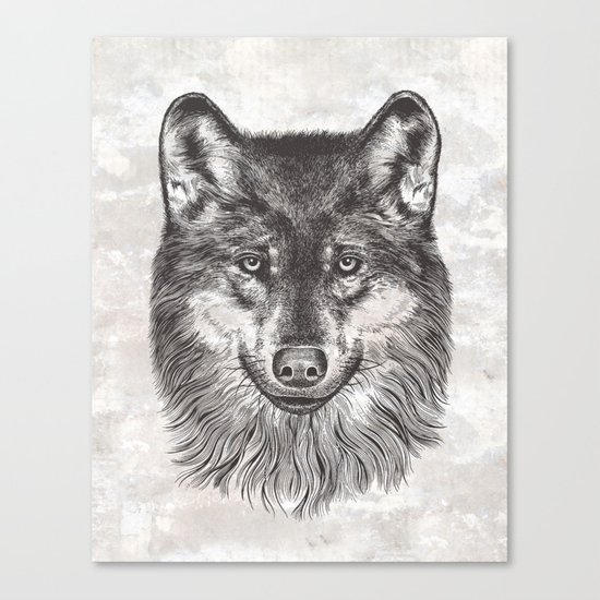 Canis Lupus (Gray Wolf) Canvas Print