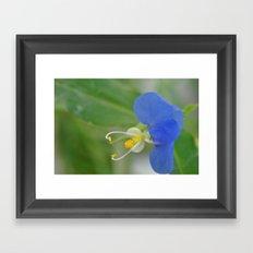 not every flower looks like a flower Framed Art Print