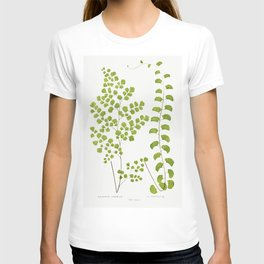 Adiantum Assimile and A Lunulatum from Ferns British and Exotic (1856-1860) by Edward Joseph Lowe T-shirt