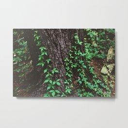 Forest Trail XL Metal Print