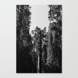 Sequoia National Park XII Canvas Print