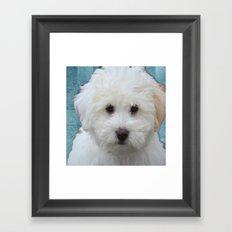 Cute Puppy Framed Art Print