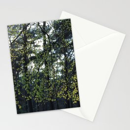 Sunlight and Oak Trees Stationery Cards