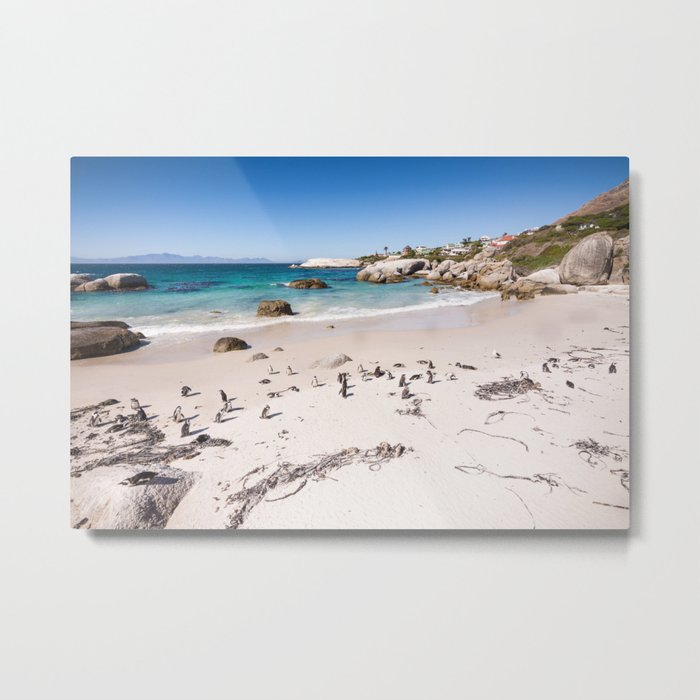 Penguins on Boulders Beach in Cape Town, South Africa Metal Print