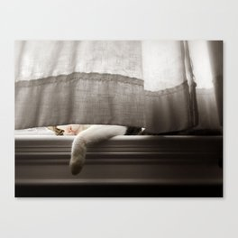 Cat Napping On A Window Sill Canvas Print