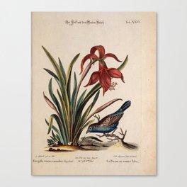 Verzameling van uitlandsche en zeldzaame vogelen Canvas Print