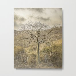 Ceiba Tree at Forest Guayas Ecuador Metal Print