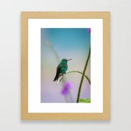 Costa Rican Hummingbird Framed Art Print