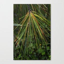 Sappy Multicolor Pine Needles Canvas Print