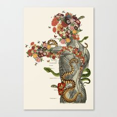 Serpens - Anatomical collage art by bedelgeuse Canvas Print