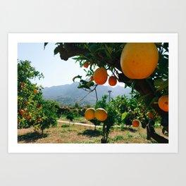 Naranjas Art Print