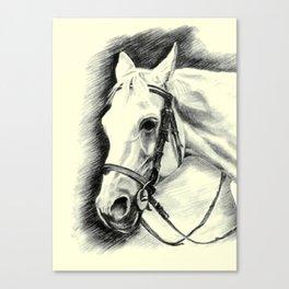 Horse-portrait Canvas Print