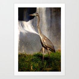 Great Blue Heron - Hunting Art Print