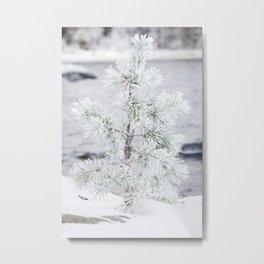 Snowy small tree Metal Print