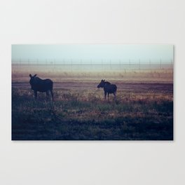 Cow and Calf Moose in Morning Mist, Delta Junction Alaska Canvas Print