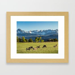 A Herd of Black-Tailed Mule Deer Graze Near the Base of the San Juan Mountains in Ridgway, Colorado Framed Art Print